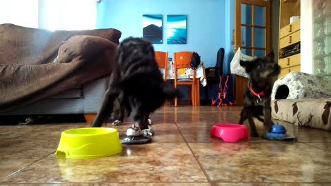 Dogs learn to ring bell for treats