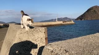 Amazing cat makes an impressive Jump