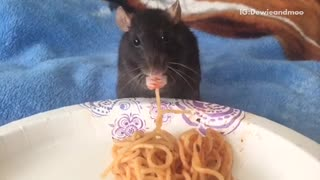 Rat eating spaghetti