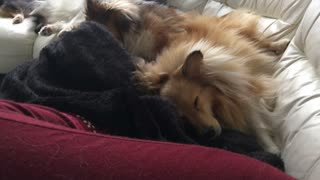 Pack of sleeping dogs instantly wake up to magic word