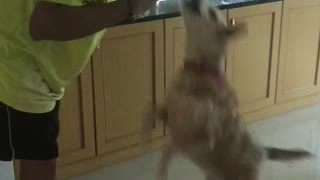 Dog Giving a kiss before getting a treat
