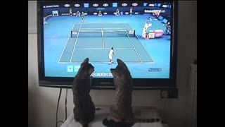 Bengal cats play tennis with Andy Murray - Video