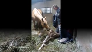 Couple Noticed Their Horse Giving Birth, What Happened Next STUNNED Them! - Video