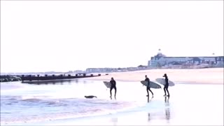 Three surfer guys following seal into water