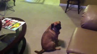 Funny dog video complation - Video