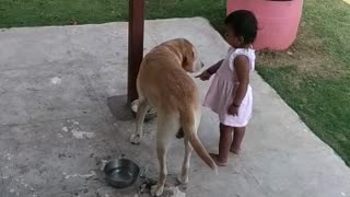 Strict baby makes sure dog finishes his food