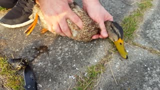 How to Save a Duck Foot - Video