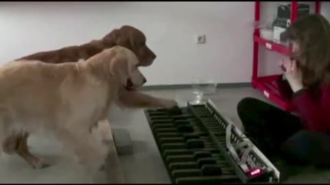 Check Out These Amazing And Talented Dogs Playing The Piano