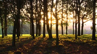 View Of Sunset Between Forest Trees