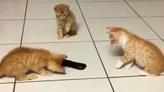Kitten siblings take on