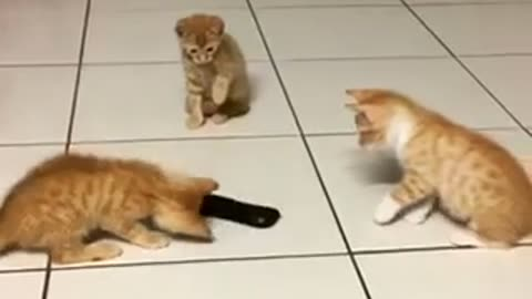 "Kitten siblings take on ""scary"" remote control"