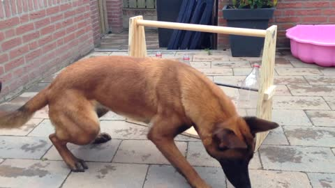 Compilation Of Clever Dogs Flaunting Impressive Talents
