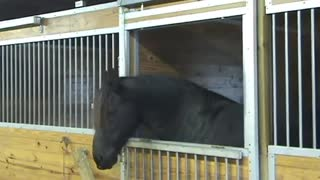 Horse Helps His Pals Escape From a Stable - Video