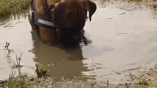 Mud bath anyone?  - Video