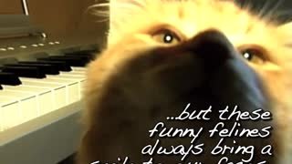 Funny Felines...Crazy Cats - Video