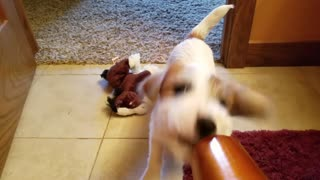 Puppy vs Blow Dryer - Video