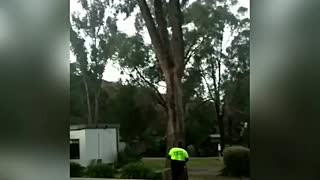 That Tree Looks Dangerous, I Better Cut it Down - Video