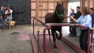 Horse On a Treadmill - Video