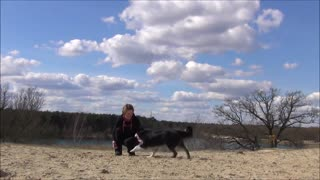 Rebound training with Border Collie - Video