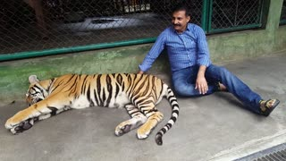 Playing with Tiger