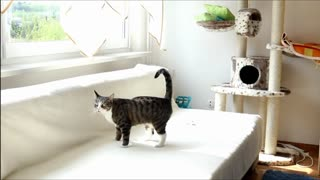 Funny Cat and his helicopter. - Video