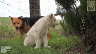 Dog and lion cub are best friends