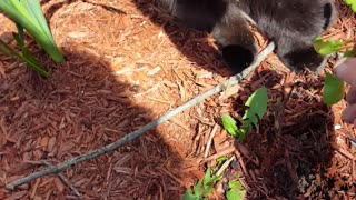 Kitty Wants To Help - Video