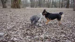 Playing of Fighting, Dogs best time,