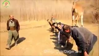 Men Playing With Antelope - Video