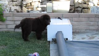 Puppy Helps Dad! - Video