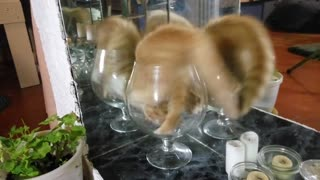 A Glass of Kitten Cuteness - Video
