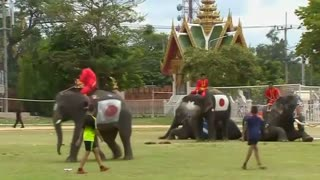 Thai elephants kick off World Cup craze - Video