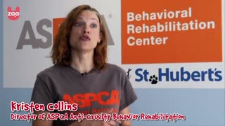 Doggie Treatment Center - Video