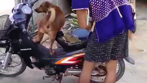 Two Dogs on a Bike