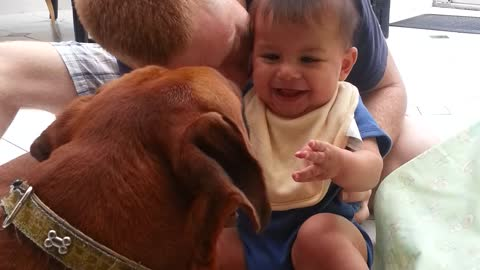 Adorable baby laughing with boxer dog
