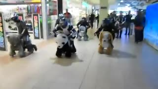 Check Out This Hilarious Race On Motorized Animal Cars - Video