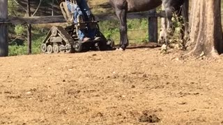 Paraplegic Bonds With Horse - Video
