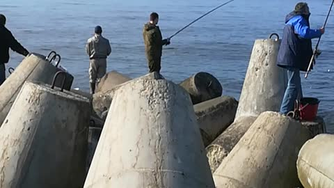 Fishermen catch a big sprat in the Baltic sea. 5-6 fish to the bait.