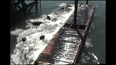 Sea Lion Capsizes Dock
