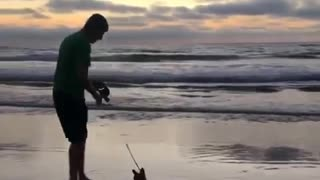 Man and small dog walking on beach sunset - Video