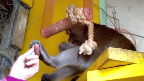 Monkey forces human away! Wait for the final shove