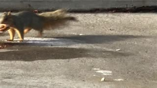 Squirrel Pastry Robbery - Video