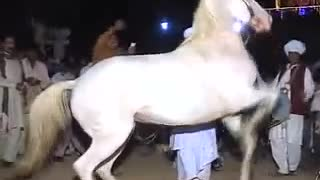 two horse amazing dance style in wedding