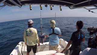 Fishing For MONSTER Goliath Groupers - Video