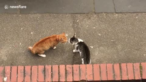 Cats have epic showdown on street