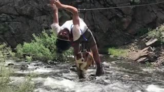 Daredevil corgi fearlessly crosses river