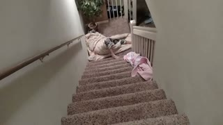 Kid rolled in blanket down stairs - Video