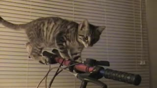 Collab copyright protection - kitten stands on handlebars - Video