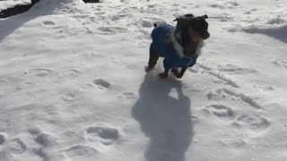 Slowmo blue sweater dog runs across snow parking lot - Video