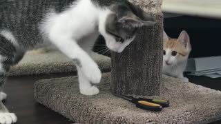 Cat afraid to touch a scissors - Video